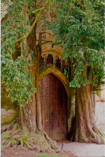 yew-and-church-door